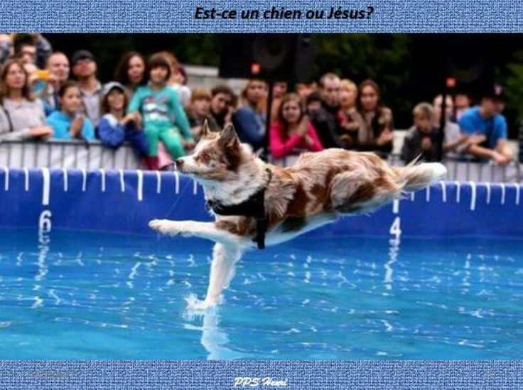 Best Funny Perfectly Timed Photos Images On Pinterest Cameras - Photographer proves dogs can fly with funny perfectly timed photos