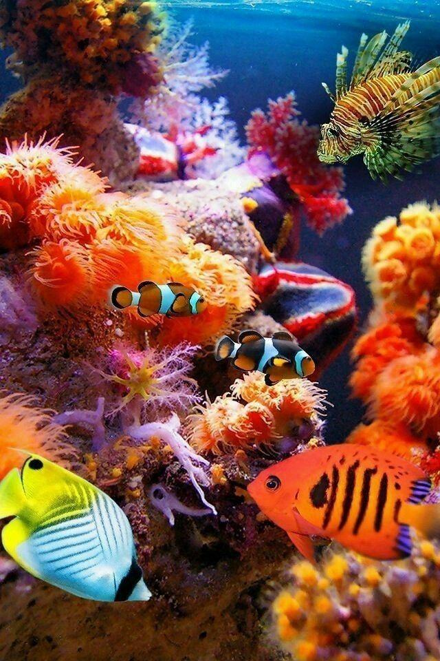 Картинки на телефон рыбки