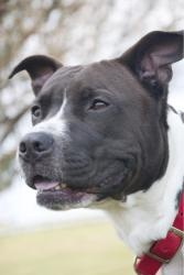 Dog Adoption Halifax Ns
