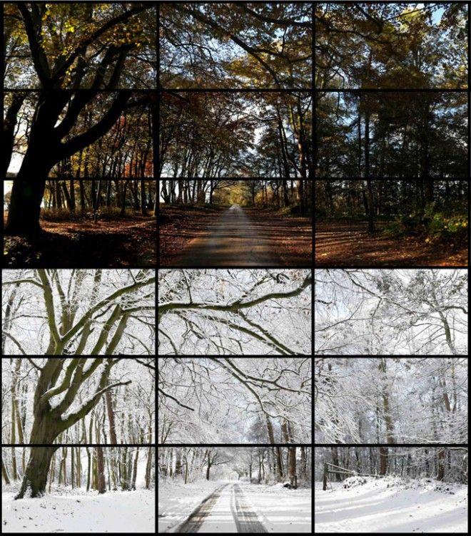 Hockney-Woldgate-Woods-DSLR-660x752.jpg 660×752 pixels