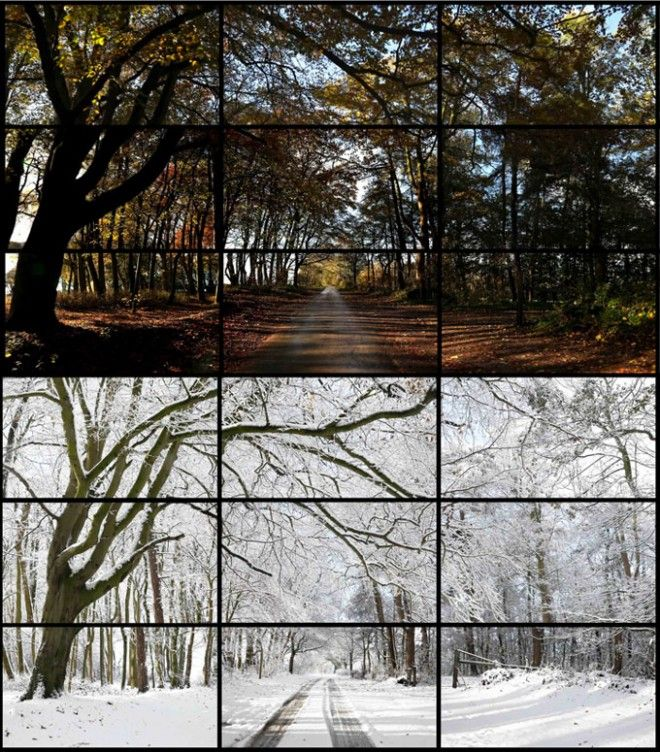 Hockney-Woldgate-Woods-DSLR-660x752.jpg 660×752 pixels