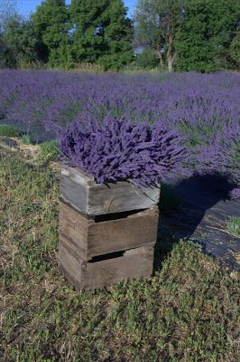 351 Best Images About Lavender ༺ ༻ On Pinterest Provence