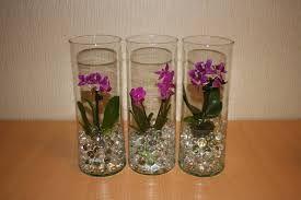 выращивание орхидеи в вазе в воде ile ilgili görsel sonucu