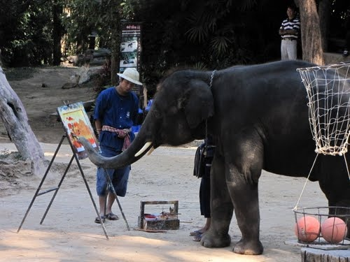 Believe or not, they paint!  Maesa Elephant Camp;  Mae Rim, Chaing Mai, Thailand;  photo by ☆AXL♈BACH☆, via Panoramio