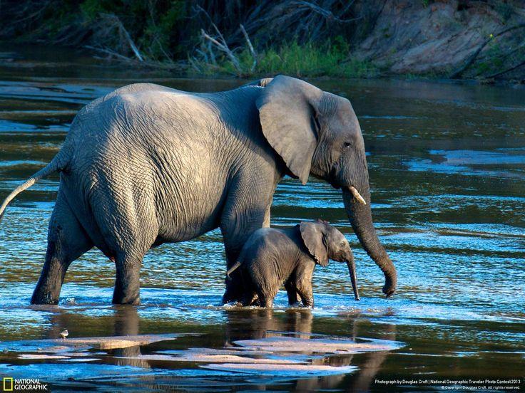free high resolution wallpaper elephant