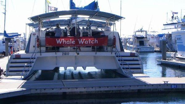 30.07.2014 Imagine Whale Cruise