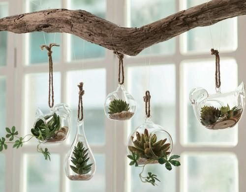plant terrariums hanging from a branch