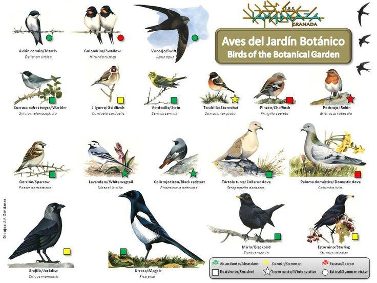 87 mejores imágenes de Aves en Pinterest | Pájaros bonitos, Aves ...