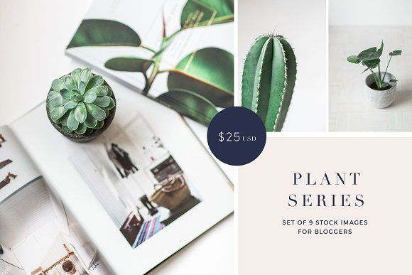 Minimalism, botanical greenery, and simple photos are near to my heart. I love green and I love plants. This stock photo bundle is perfect for bloggers who want to have clean and bright online presence ($25). #ad #plant #botanical #cactus #minimal #stock #photo #bundle #photography