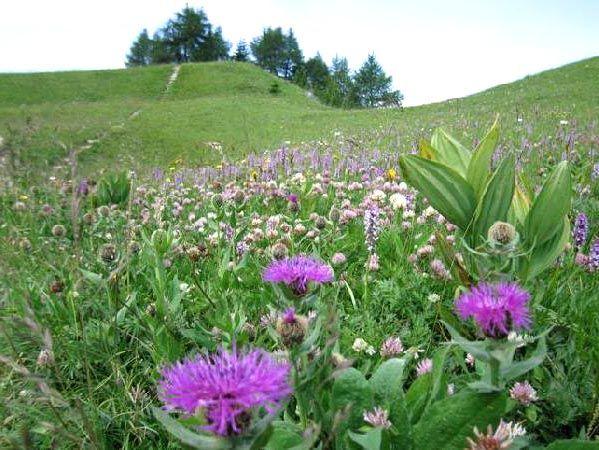 Aprile le erbe selvatiche commestibili da raccogliere: dall'aspra acetosa fino ai bruscandoli, passando per le dolci cime di ortica, i p ...