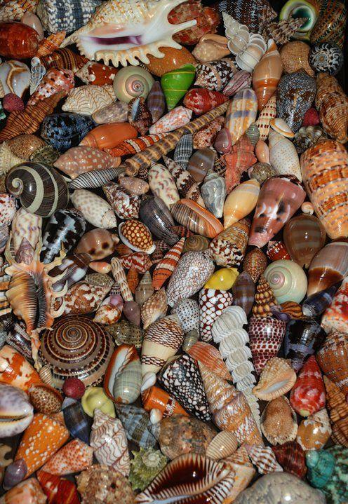 Shells. Spirals galore!