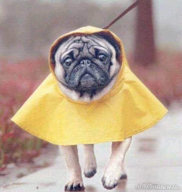 lluvia fotos   Día de lluvia - En HumorAnimal, fotos, vídeos e imágenes graciosas ...