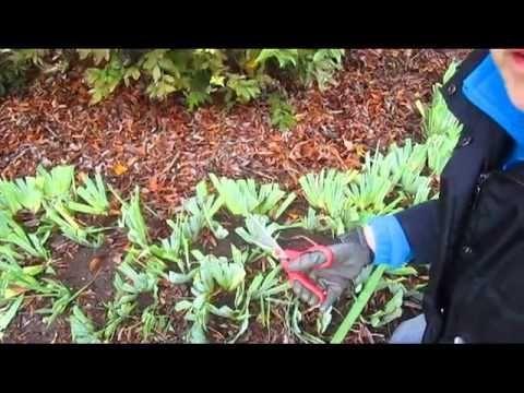 Deep Mulch Gardening , 913 Best Gardening Ideas Images On Pinterest