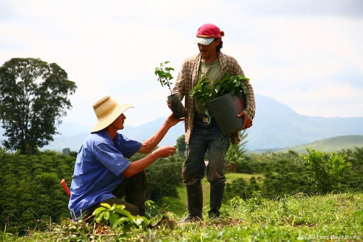 Siembra Café / Coffee Planting