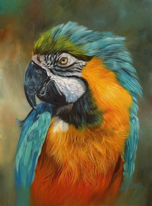 Blue Animal Print Wallpaper Macaw Parrot Art Print By David Stribbling Living Room