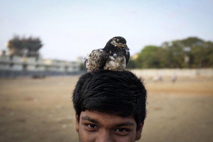 Животные в новостях: самые маленькие парнокопытные, собачий бейсбол и апельсиновый рай орангутанга