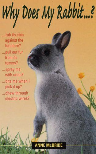Why Does My Rabbit...? A fab book by Dr Anne McBride