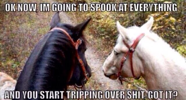 This is probably what really happens on trail rides!!