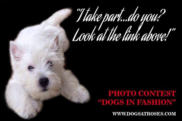 dog photo contest http://www.dogsatroses.com/www/adv/2015concorso/contest.aspx  #dogs #accessories #madeinitaly #fashion