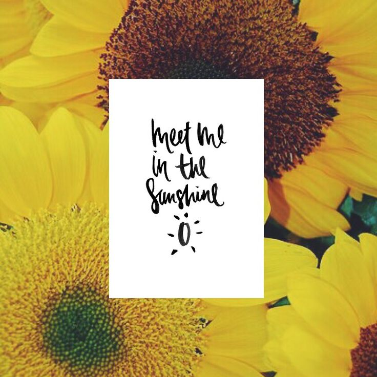 ️Meet Me In The Sunshine  Print handmade typography available in A3, A4 and A5 @ www.sunflowerlab.com.au