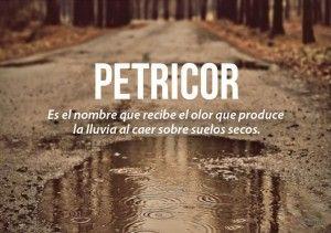 Petricor: Es el nombre que recibe el olor que produce la lluvia al caer sobre suelos secos