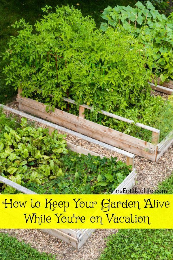 19698 best DIY Gardening Ideas images on Pinterest ...