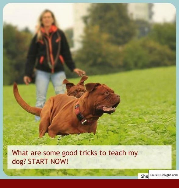 Best Potty Training Tips For Dogs And Pics Of How To Train Your