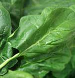 Spinach, Virtually all minerals are unaffected by heat. Cooked or raw, food has the same amount of calcium, phosphorus, magnesium, iron, zinc, iodine, selenium, copper, manganese, chromium, and sodium. The single exception to this rule is potassium, which — although not affected by heat or air — escapes from foods into the cooking liquid.