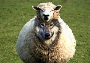 A Wolf in Sheep's Clothing: - Cowboy Builders: – Why Cowboy? Well my understanding is that the European image of the Cowboys of the Wild West, as portrayed by Hollywood, is one of recklessness and wild disregard, hence when an individual or company provides substandard workmanship at an inflated price, they are often referred to as 'cowboy's'.