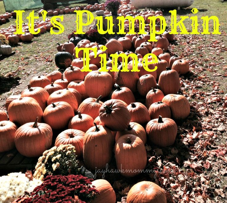 It's pumpkin time and my family went on a hunt for a few at the local pumpkin patch!
