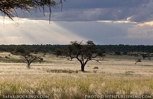 Beautiful photo of #Mabuasehube Pan (Botswana side) @ Kgalagadi Transfrontier Park in #SouthAfrica. See our #Kgalagadi travel guide: http://www.safaribookings.com/kgalagadi