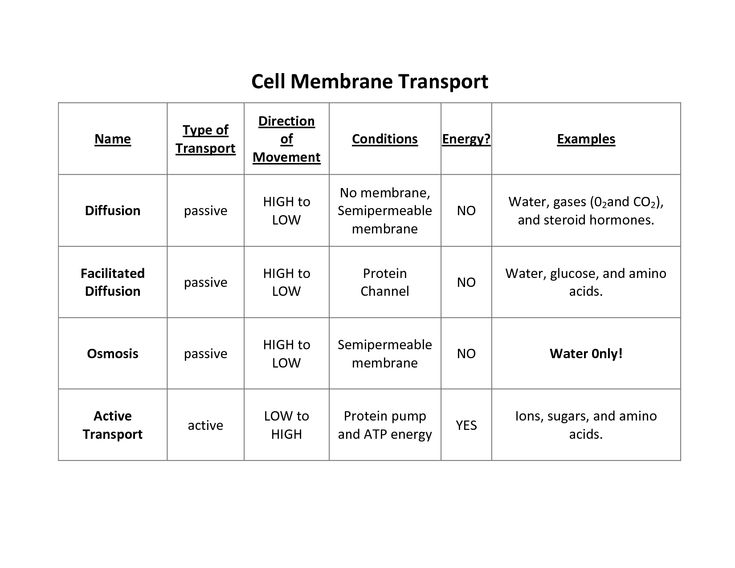 Cell Transport Worksheet 7th Grade Pdf - cell transport worksheet ...