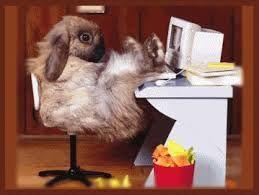 Afbeeldingsresultaat voor lieve en grappige konijnen