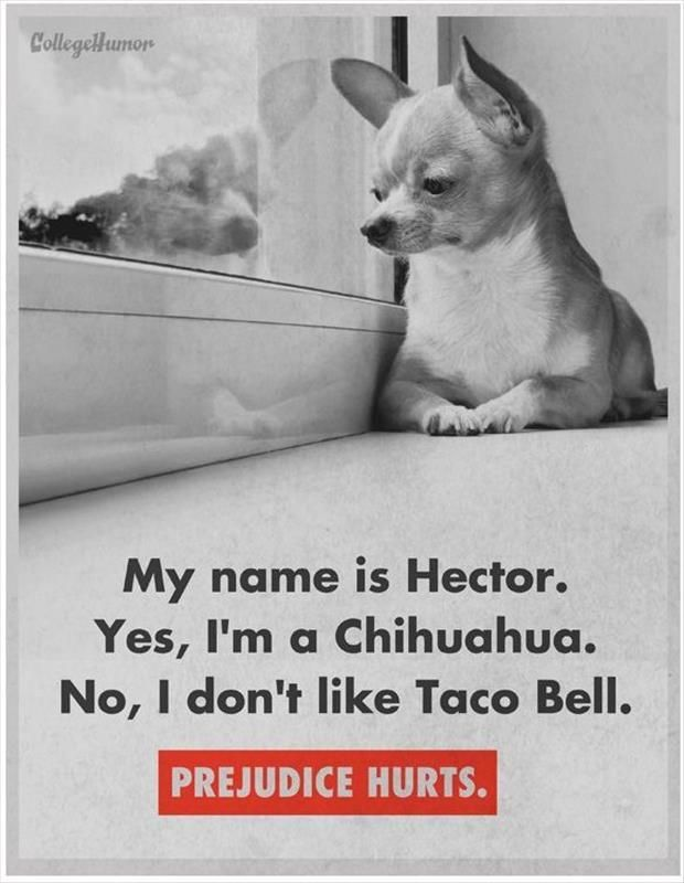 Dump A Day Attack Of The Funny Animals – 24 Pics