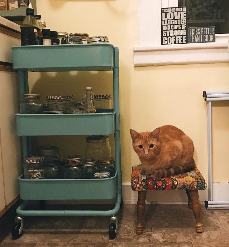 "535 Likes, 31 Comments - Katie (@katiealligator) on Instagram: ""The littlest of beans . . . . . . . . . . . . . . . . #kitchen #kitchendecor #littlekitty…"""