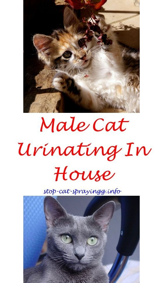 Spray To Deter Cats From Peeing On Carpet Tom Cat Spray Eliminate