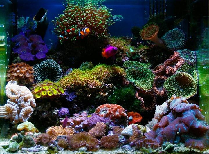 Nano reef tank of the month aquarium pinterest for Nano saltwater fish