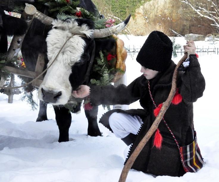 Peste 20 de ani de tradiţie - Pluguşorul de Sf. Vasile la Mănăstirea Moldoviţa