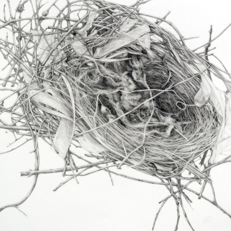 It's just a picture of Rare Bird In Nest Drawing