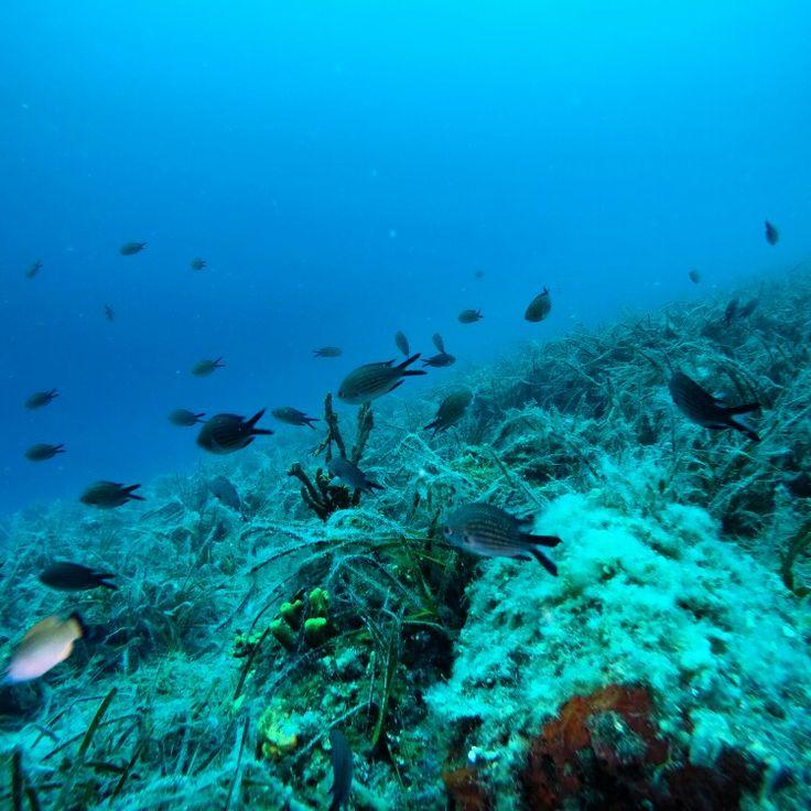 Ayvalık dalış okulu - ida dalış merkezi  #scuba #scubadiving #diving #underwater #dalisnoktam #daliskursu #dalisokulu #ayvalikdalis  www.idading.com