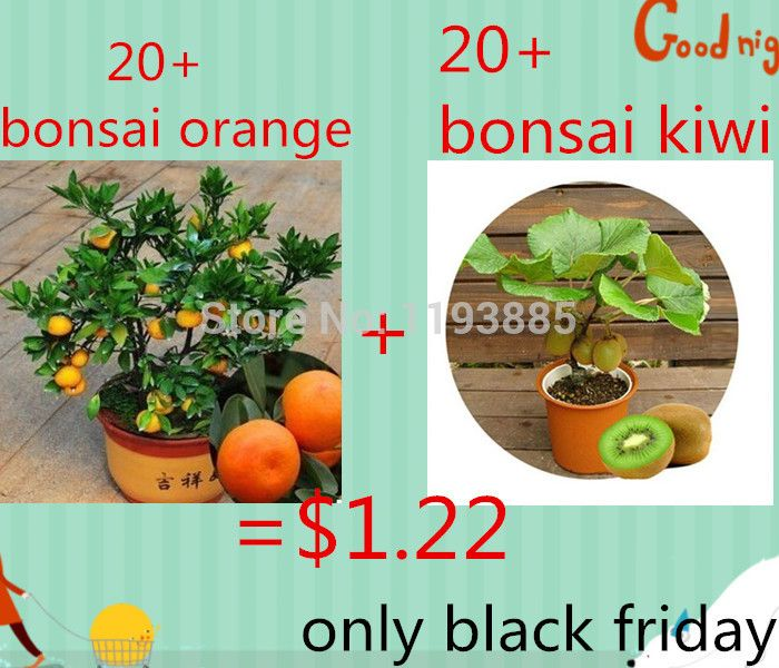 $ 1,22 krijg 20 Thailand Mini Kiwi Fruit zaden en 20 gouden oranje zaden zaden voor zwarte vrijdag als geschenk