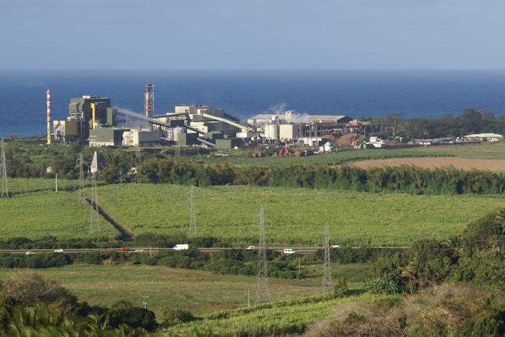 énergie biomasse | Biomasse ! | Reunion Energies Futures