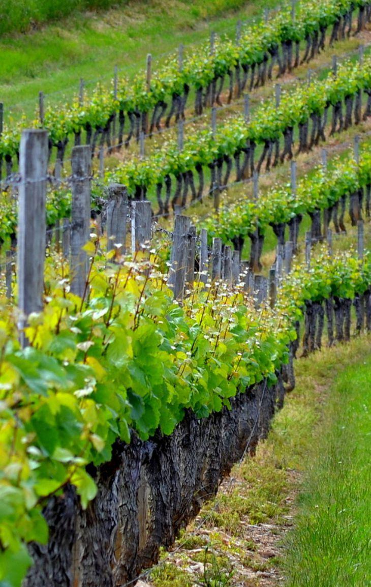 Hautes C 244 Tes De Nuits Bourgogne France Wine Vineyards