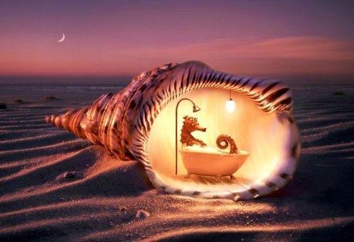 sea horse in tub - thomas herbrich