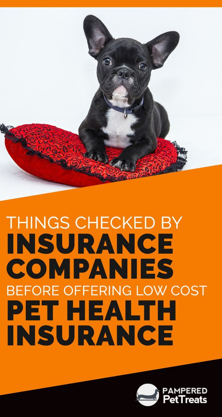 Things Checked By Insurance Companies Before Offering Low Cost Pet