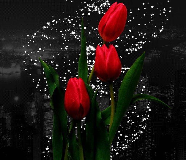 Добрый вечер цветы гифы