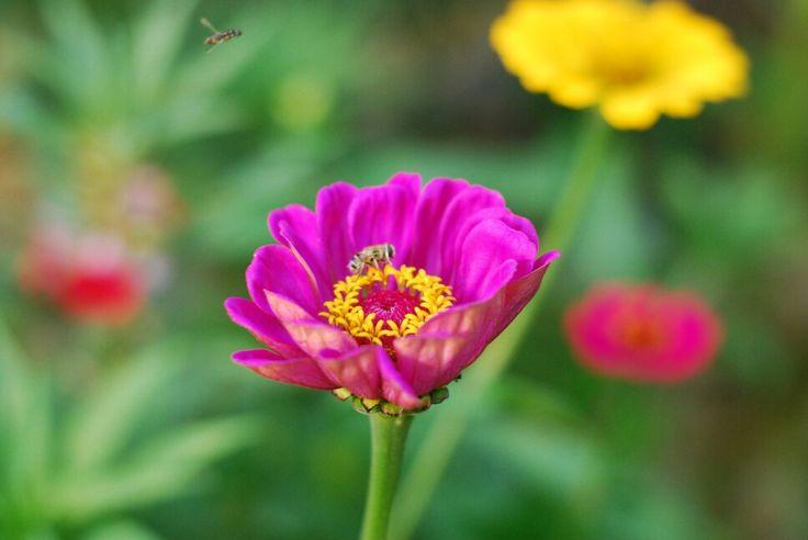 꽃을 찿아서~