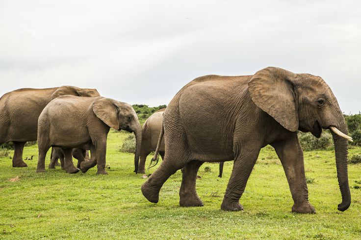 Elephants having fun at Addo Elephant National Park - Photography by Rory Alexander
