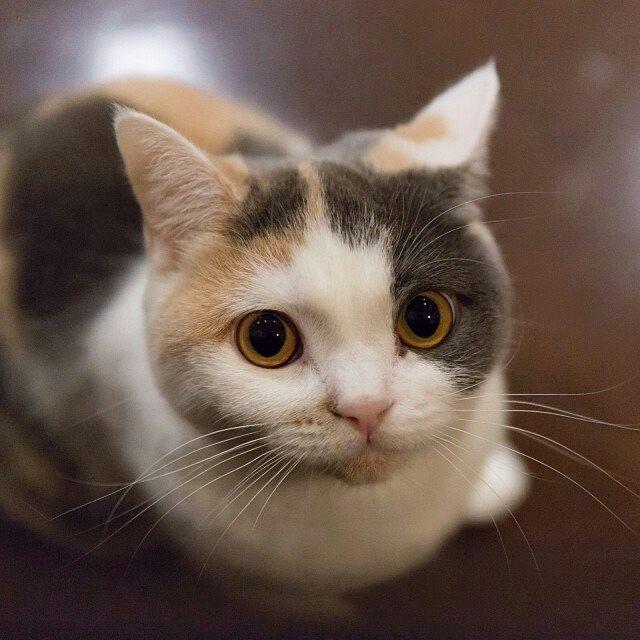 .soft kitty, warm kitty.......