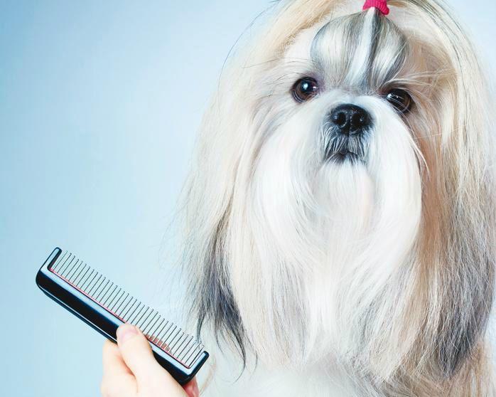 A troca de pelos acontece em todos os animais, mas é mais abundante naqueles de pelagem curta